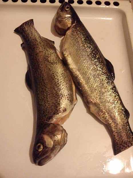 طرز تهیه ماهی در فر گاز